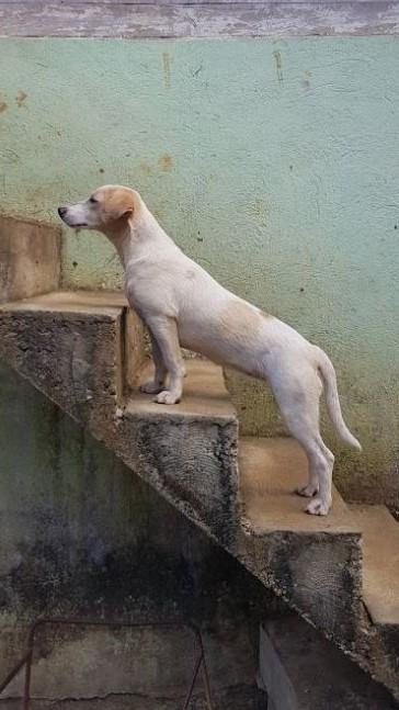 Hund Finca Buenos Aires (2)